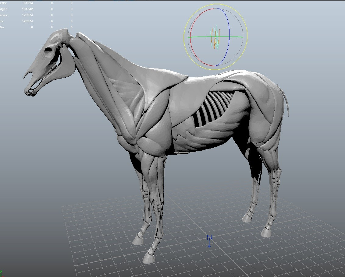 image horsebones.jpeg