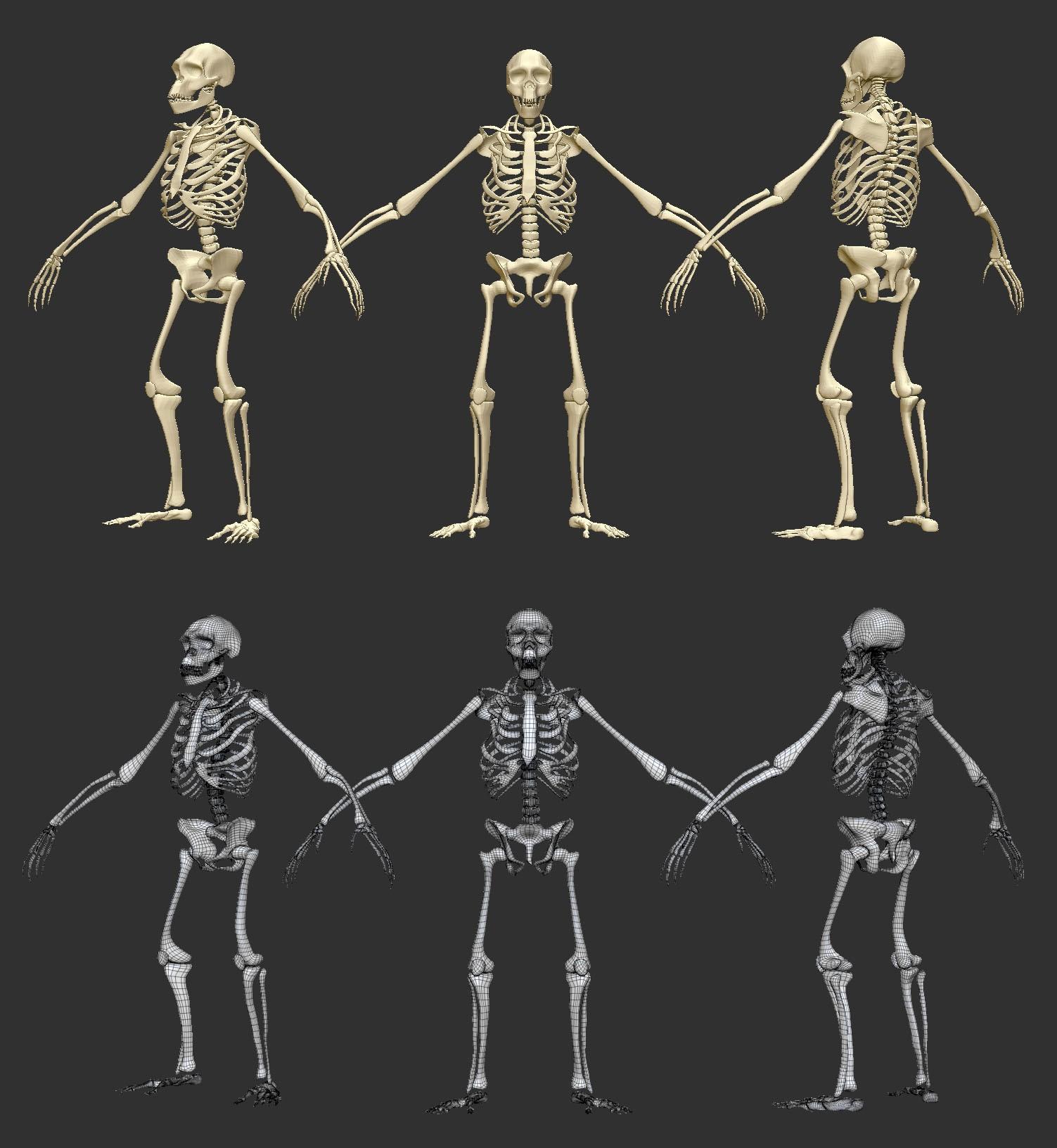 image skeleton.jpeg