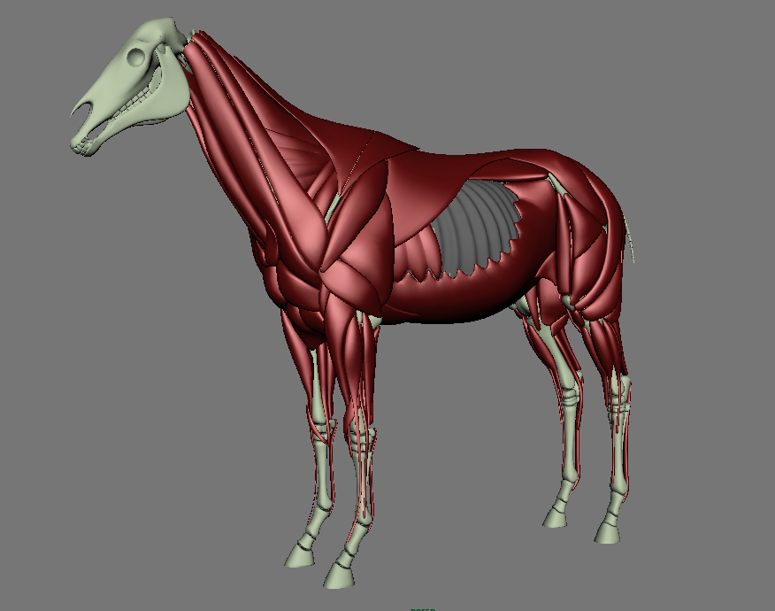 Making a horse with Ziva - Ziva Community