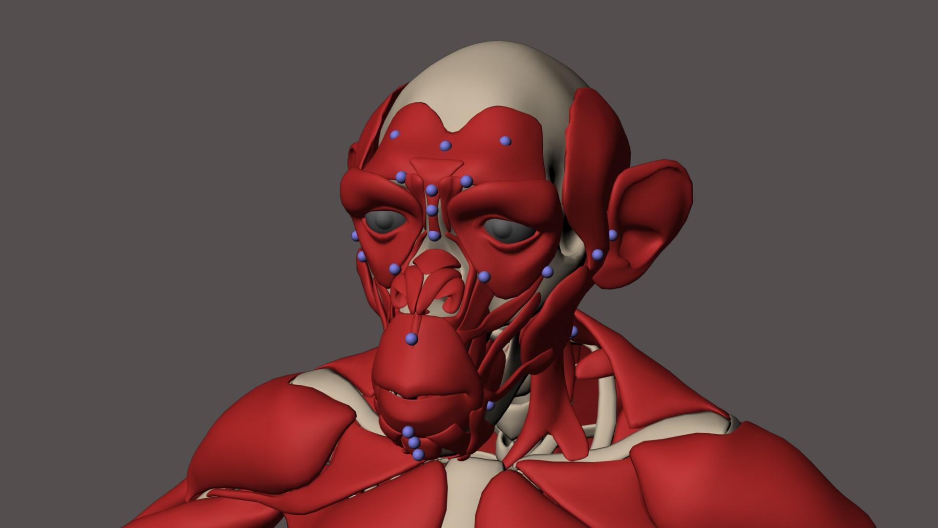 image facial-muscles-v01.jpeg