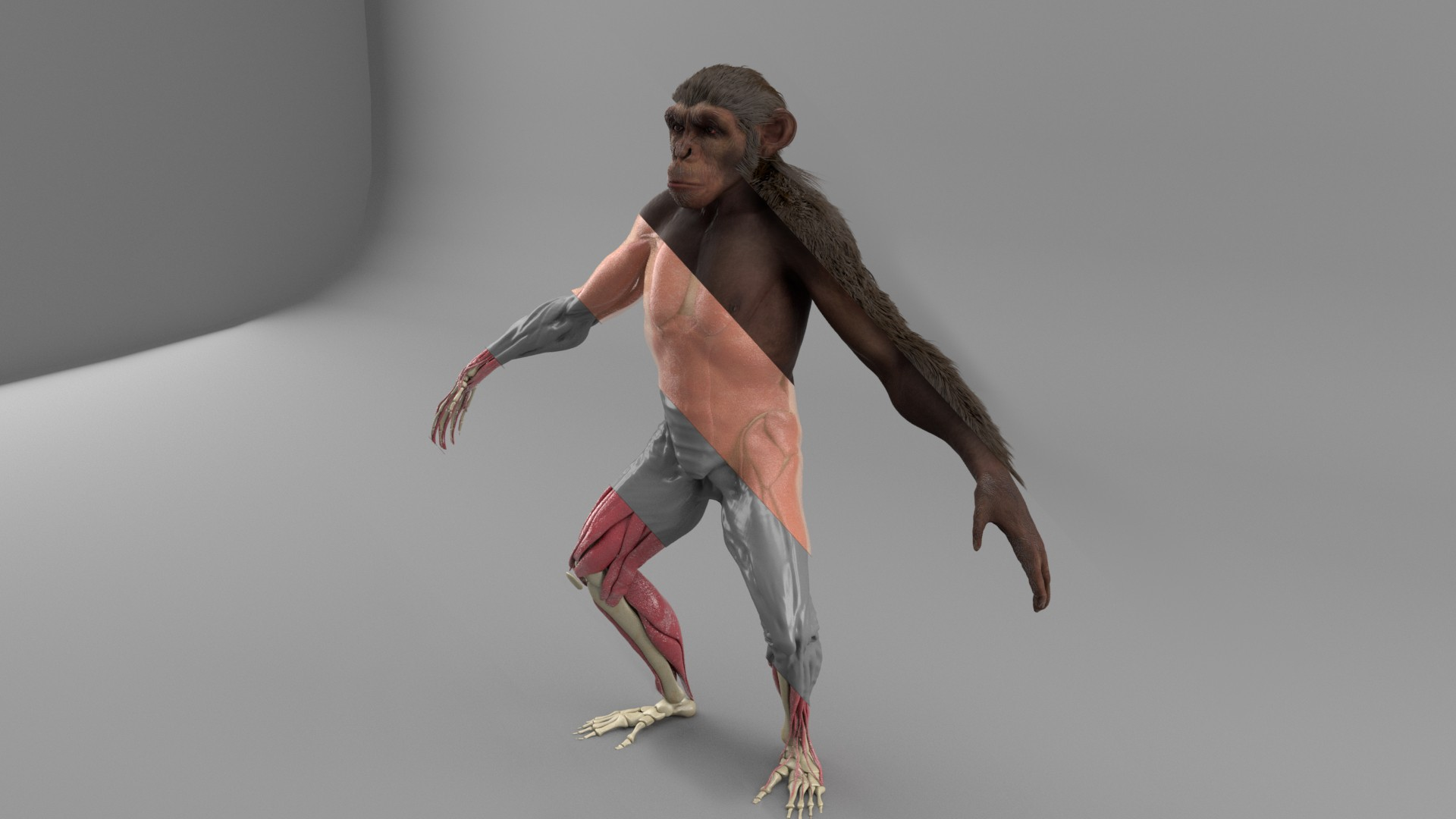 image ape-passes.jpeg