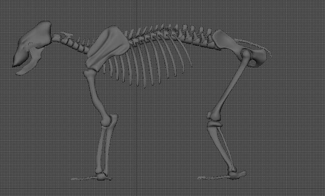 image leg-proportion.png