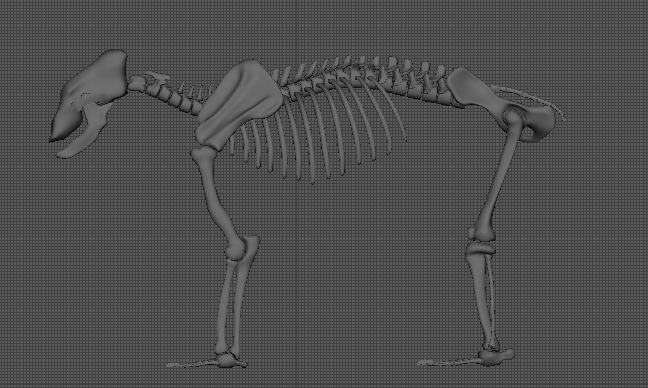 image leg-proportion2.png